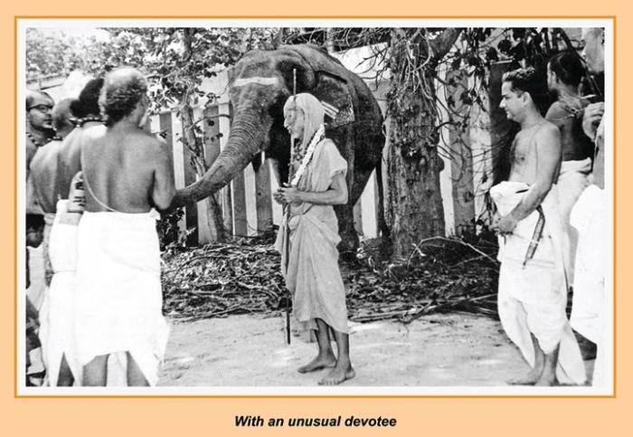 periyava_elephant