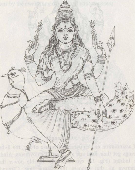 Kaumari